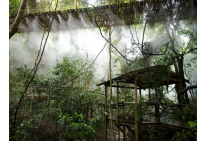 Mist Forest At Birds Of Eden