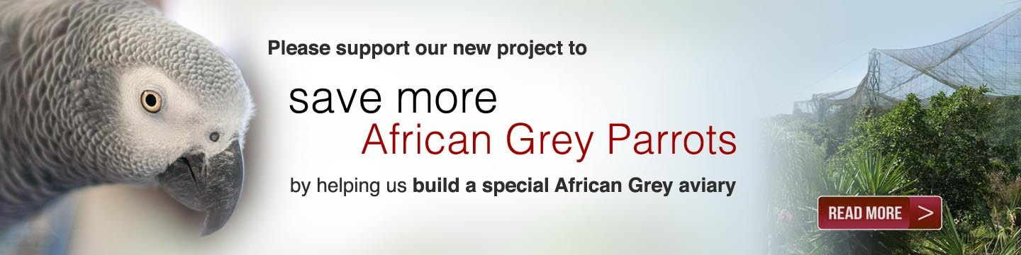 Help save the African Grey parrot